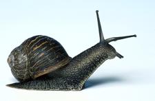 Snail060320